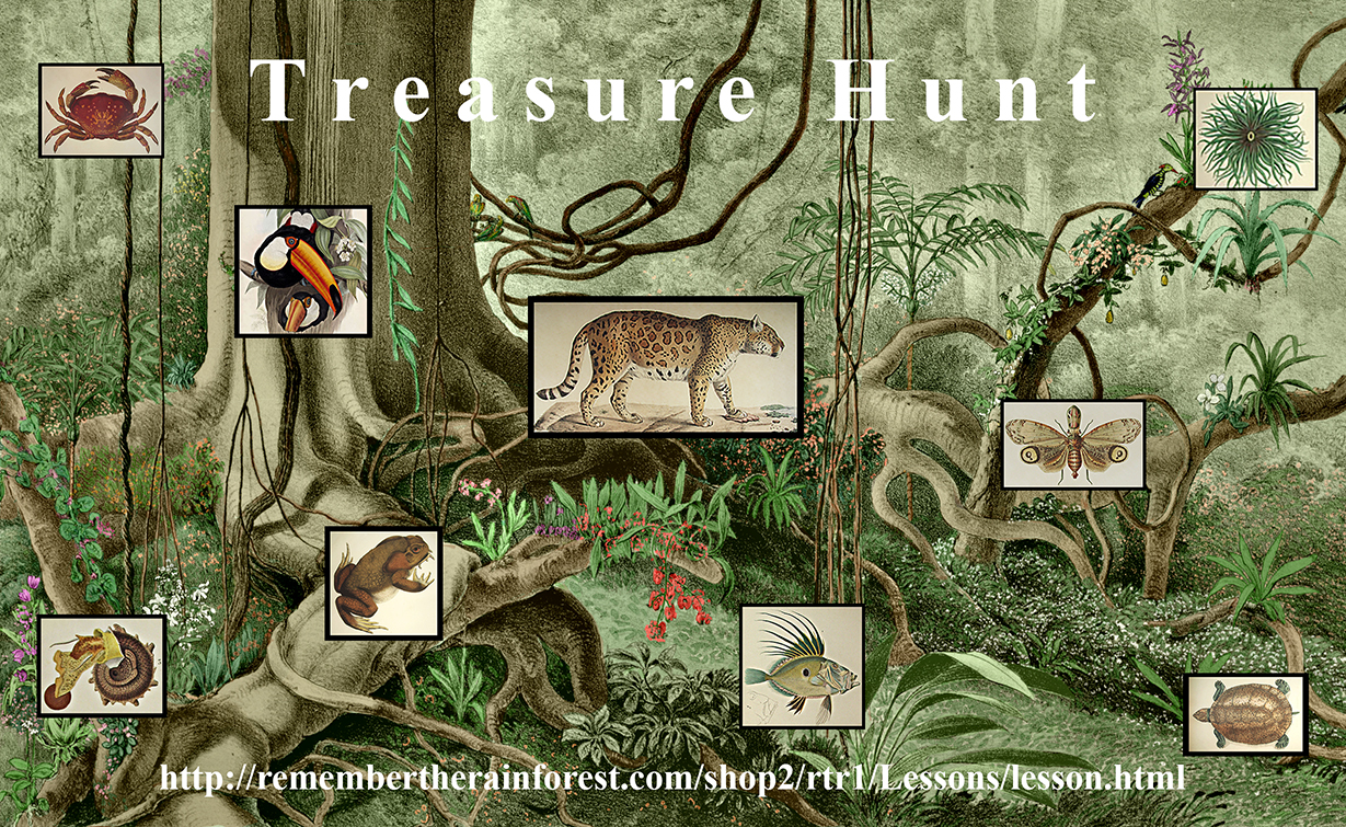 Remember the Rainforest : Treasure Hunt (Grades K-2)