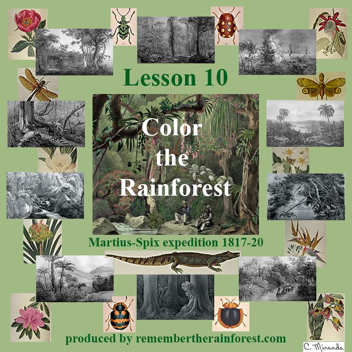 Remember the Rainforest : Color the Rainforest