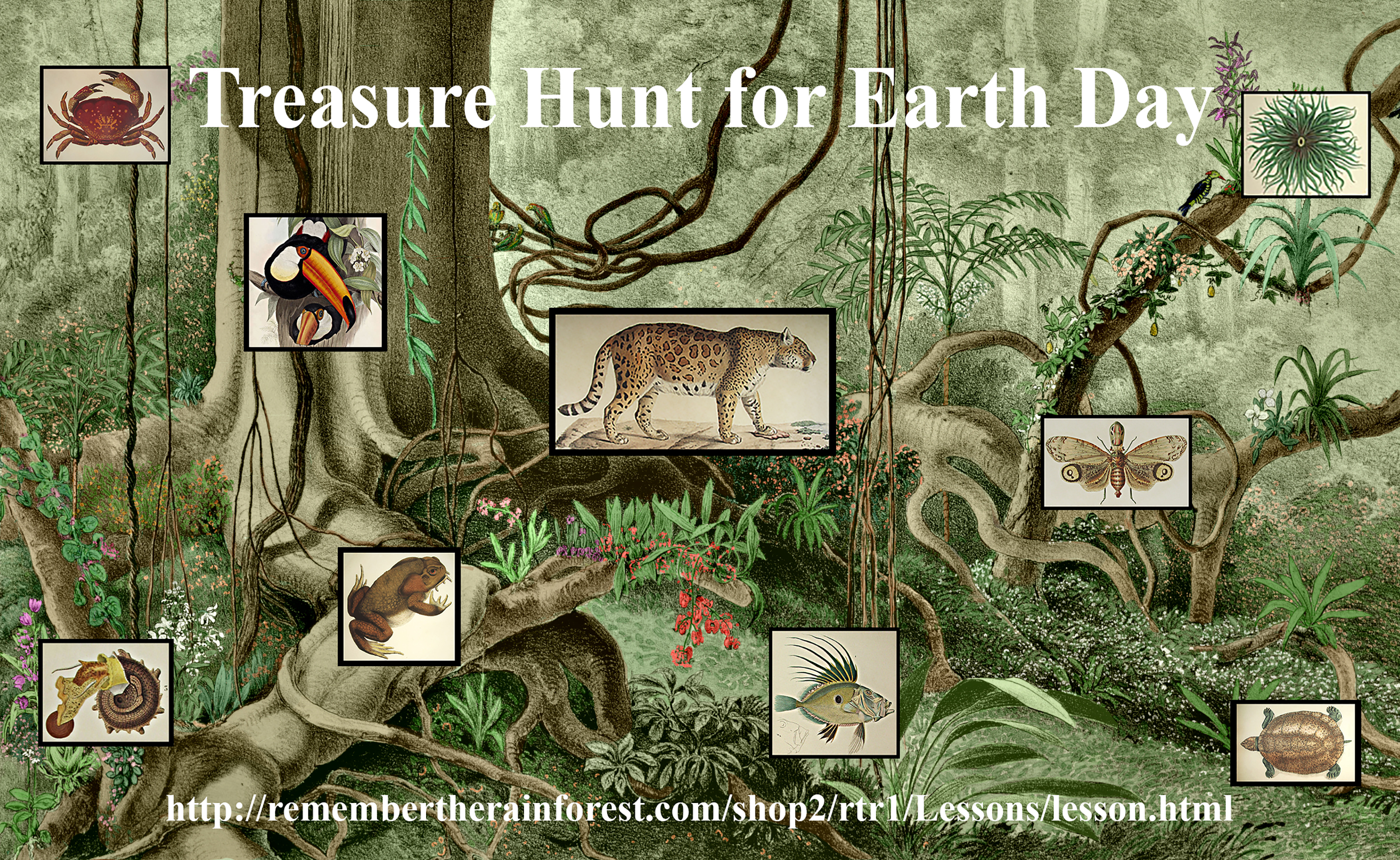 Remember the Rainforest : Treasure Hunt