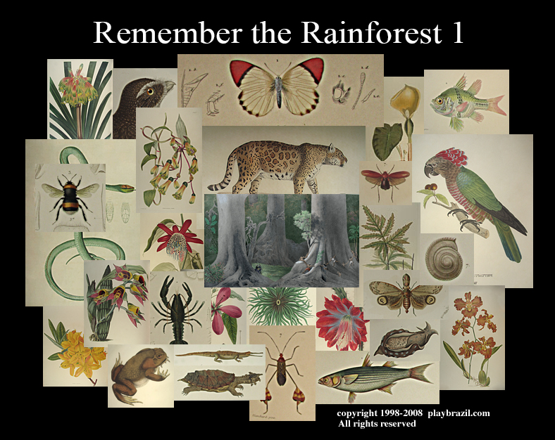 Remember the Rainforest : Populate Your Rainforest